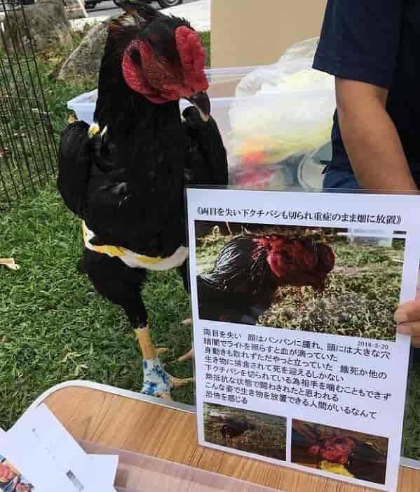 沖縄ヴィーガン祭りでクックハウスの目なし