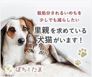 犬猫の里親募集