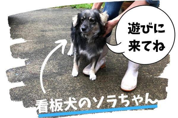 自然派ペンション「パンプキン」看板犬のソラちゃん