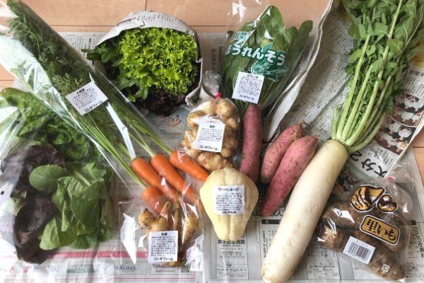 コンタファームの有機野菜セット